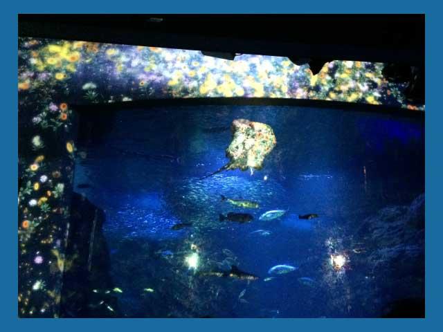 相模湾大水槽の花と魚のアート空間